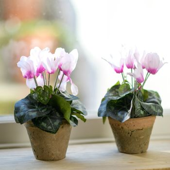 Faux Pink Cyclamen Hand Potted Plant