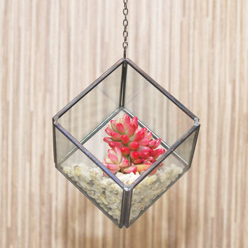 Mini Geometric Glass Cube Succulent Terrarium Kit