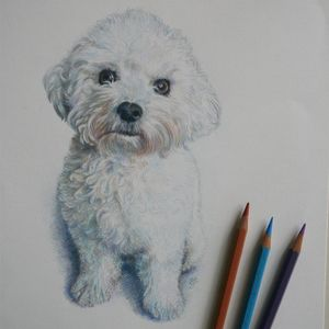 Pet Or Animal Pencil Portrait - drawings & illustrations