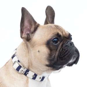 Breton Stripe Dog Collar - pet collars