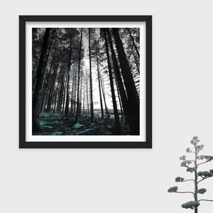 Limited Edition 'Forest' Photographic Print - giclée