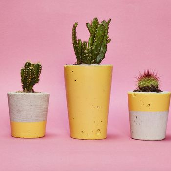 Yellow Concrete Plant Pot With Cactus Succulent
