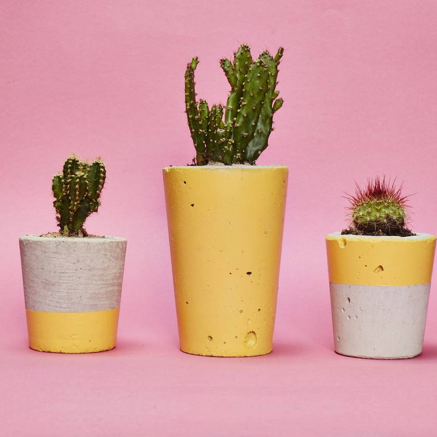 Yellow Concrete Plant Pot With Cactus Succulent By Hi