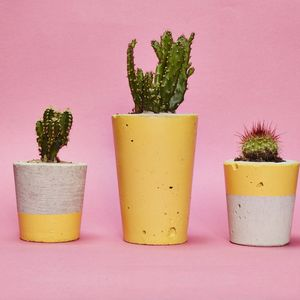 Yellow Concrete Plant Pot With Cactus Succulent - flowers, plants & vases