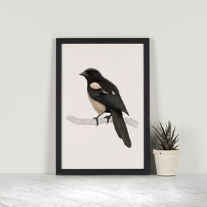 Magpie Illustration Print - animals & wildlife