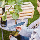 Grow Your Own Prosecco Style Sparkling Wine Gift Crate