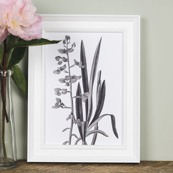 'Lifsochilus' Botanical Illustration Print
