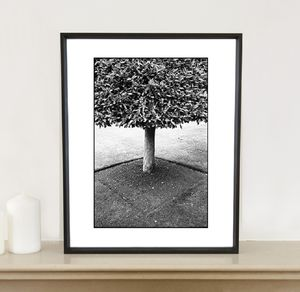 Geometry, Tree, Wimpole Estate Photographic Art Print