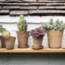 Set Of Terracotta Plant Pots