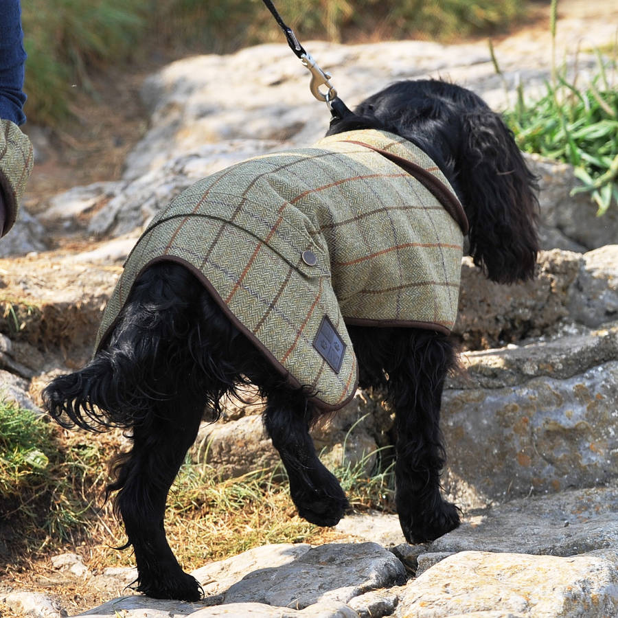 Tweed Lined Dog Coat