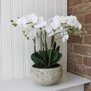 Luxury Artificial Orchid In Moss Covered Pot