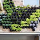 Outdoor Vertical Wall Garden Planters