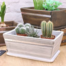 White Wooden Planter with Cacti Personalised for Mother