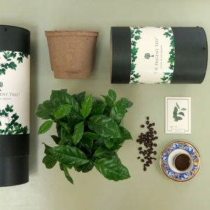 Organic Coffee Tree Gift
