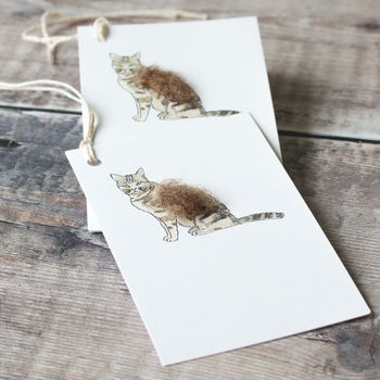 Gift Tags With Fluffy Cat, Pack Of Six