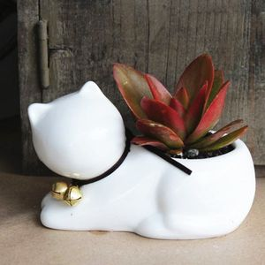 Ceramic Cat Planter With A Succulent