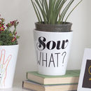 Sow What? Plant Pot Gift / With Seeds