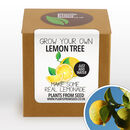 Complete Grow Your Own Lemon Tree Plant Kit