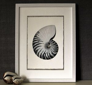 Framed Limited Edition Nautilus Shell Giclee Print
