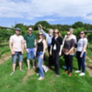 English Vineyard Tour