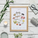 Rockpool Watercolour Print Unframed