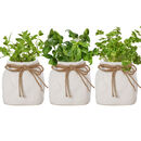Father's Day Set Of Three Ceramic Sack Herb Pots