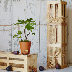 Fig 'The Family Tree' Gift - gardener