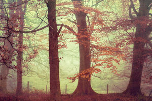 Forest Trees Fine Art Photography Print - nature & landscape