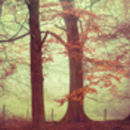 Forest Trees Fine Art Photography Print