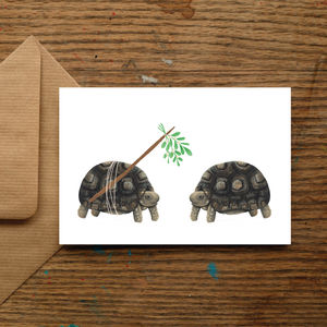 Mistletoe Tortoise Christmas Cards - summer sale
