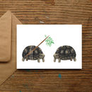 Mistletoe Tortoise Christmas Cards