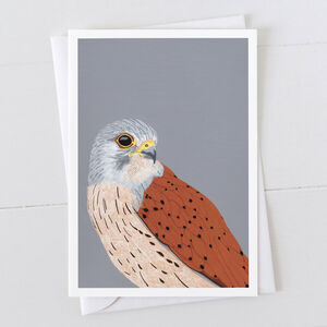 Kestrel Greeting Card