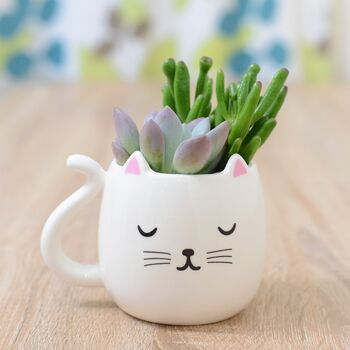 White Cat Mug Planter With Choices Of Plants