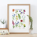 British Wild Flowers Illustrated Giclée Print
