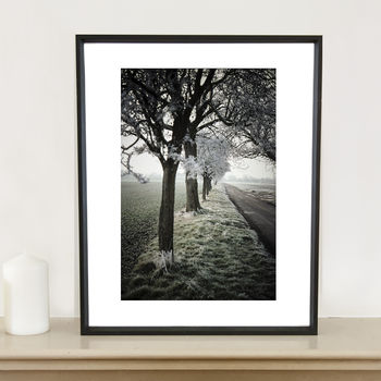 Winter Trees Photographic Art Print
