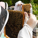 Urban Beekeeping And Craft Beer For Two Experience 2019