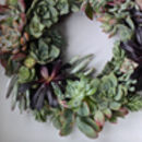 Succulent Christmas Wreath Making Experience At Home