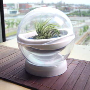 Floating Terrarium Starting Kit
