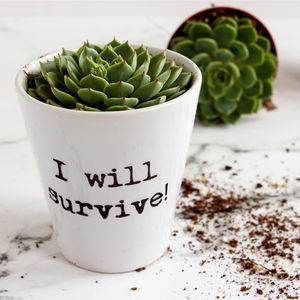 Personalised Typewritten Quote Plant Pot - pots & planters