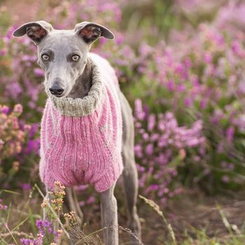Dog Jumper Kit Whippet