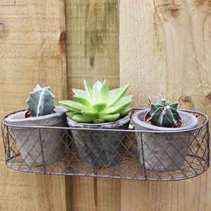Cactus Wall Box Planter - pots & planters