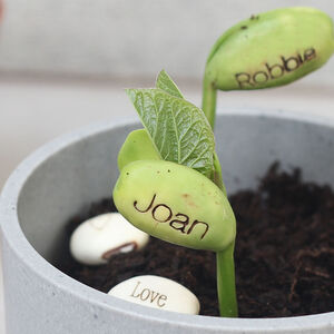 Personalised Name Bean Seeds