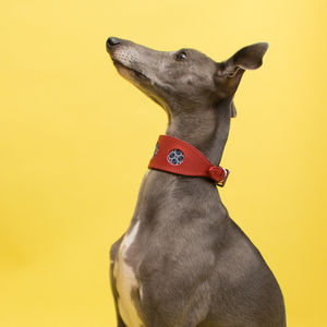 Shweshwe Navy Circles Hound Collar And Lead Set - walking