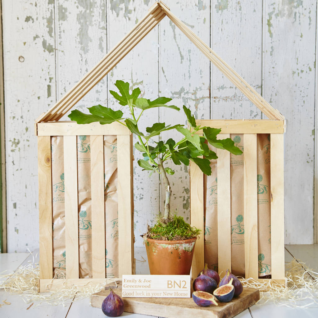 Personalised Fig Tree New Home Gift