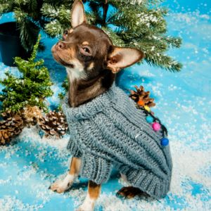 The Christmas Tree Jumper - pets christmas clothing