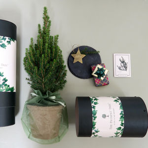 Miniature Christmas Tree Gift - christmas trees