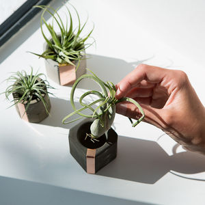 Mix It! Concrete Copper Air Plant Holder Set - gifts for him
