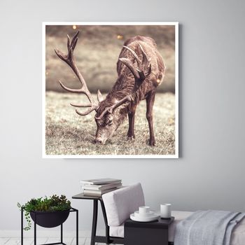 Grazing, Canvas Art