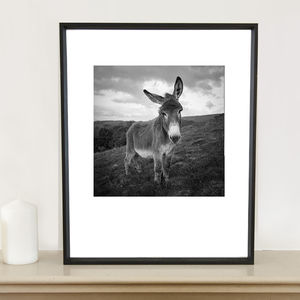 Barnaby The Donkey Photographic Art Print