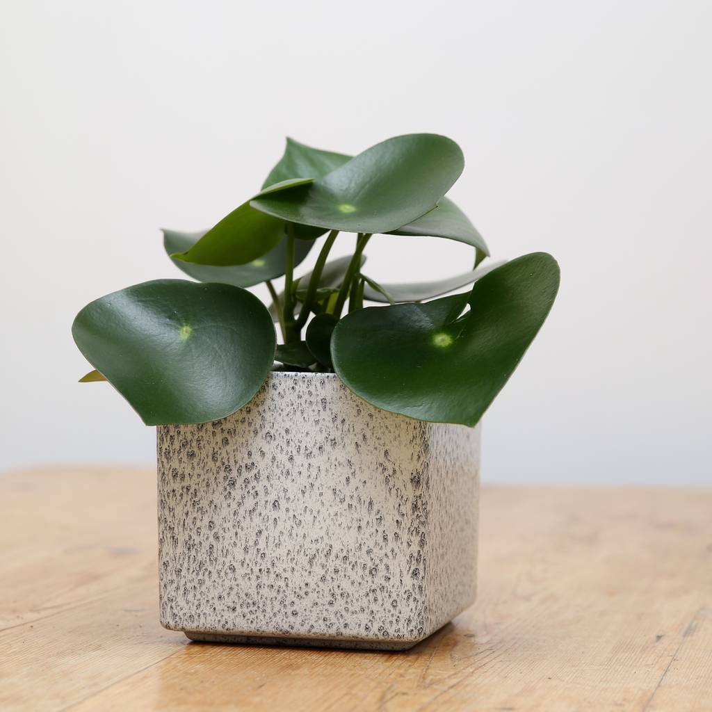 Planter No 123 Smoke Cube Ceramic